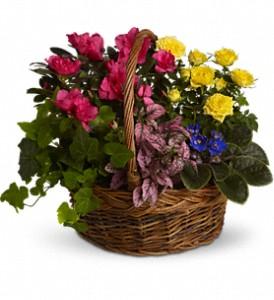 Blooming Garden Basket Funeral Plants